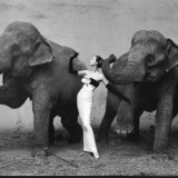 dovima-with-elephants