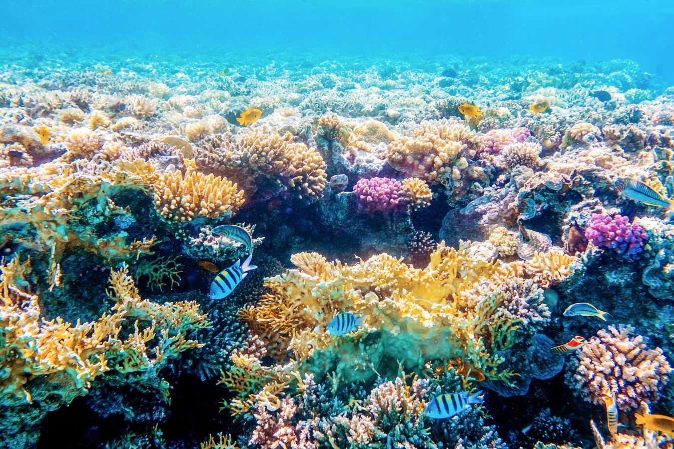 under water photography kerala