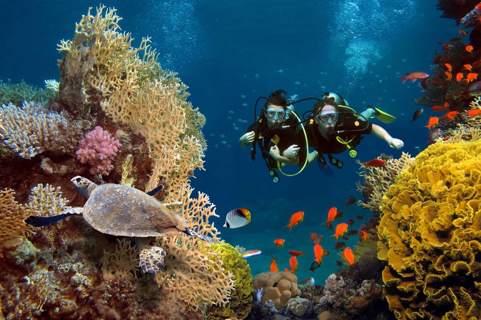 best under water photographer in india